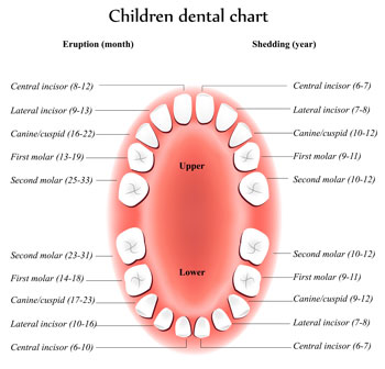 Tooth Eruption Chart - Pediatric Dentist in Tracy, CA